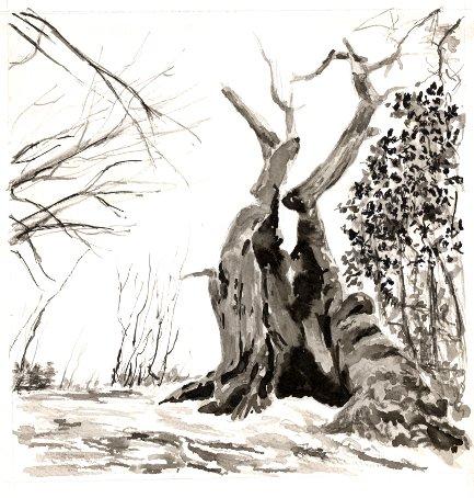 arbre1-1.jpg