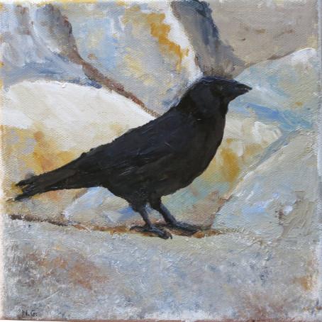 corbeau sur pierres